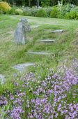 Steps up grass bank, standing stones, lychnis