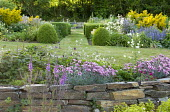 Dianthus in raised beds, dry-stone wall