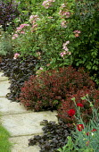 Lawn edged with paved mowing strip, dianthus, dwarf red-leaved berberis, Ajuga reptans 'Atropurpurea', Rosa 'Ballerina'