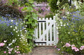 White picket gate, Scabiosa atropurpurea 'Snow Maiden', Centaurea cyanus and Alcea rosea