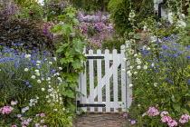 White picket gate, Scabiosa atropurpurea 'Snow Maiden', Centaurea cyanus and Alcea rosea