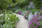 Geraniums, Stachys byzantina, Centranthus ruber 'Albus' edging path, repeat planting
