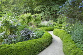 Path through low clipped box hedge edging, ceanothus