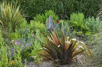 Phormiums in gravel border, poppies, geraniums, driftwood, Olearia traversii
