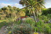 Gravel garden, Stipa gigantea, Cordyline australis, poppies, Fascicularia bicolor subsp. canaliculata