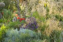 Gravel border, Stipa gigantea, Papaver orientale, Santolina chamaecyparissus, terracotta urn, Salvia farinacea 'Victoria'