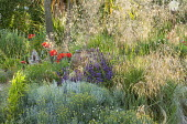 Gravel border, terracotta urn, Stipa gigantea, Santolina chamaecyparissus, Papaver orientale, Salvia farinacea 'Victoria'