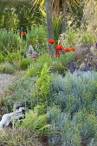Gravel garden, Santolina chamaecyparissus, helianthemum, Papaver orientale, Stipa gigantea, terracotta urn, driftwood, Carex pendula, Salvia farinacea 'Victoria'