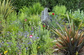 Driftwood in border, phormiums, geraniums, poppies