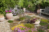 Circular paving, wooden bench, terracotta containers, creeping plants in paving cracks, osteospermum, sempervivums, cistus, Allium schoenoprasum