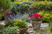 Mediterranean terrace, pelargonium in terracotta container, parsley and chives in container, nepeta