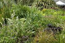 Bog garden border, Rodgersia podophylla, ligularia, astrantia, geraniums, irises, Carex comans
