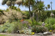 Urn in gravel garden, Stipa gigantea, Cordyline australis, Fascicularia bicolor subsp. canaliculata, Santolina chamaecyparissus, achillea