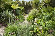 Gravel garden with exotic plantings, Astelia chathamica, Dicksonia antarctica, Echium vulgare 'Blue Bedder', Silene armeria, Trachycarpus fortunei, alliums