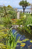 Pond with fish and water lilies, standing stone, gazania, view to sea, phormium, Cordyline australis