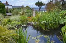 Pond in coastal garden, bench, view to sea, Iris laevigata, gazania, phormium, Cordyline australis
