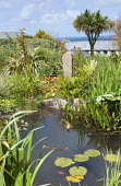 Koi carp pond in coastal garden, phormium, standing stone, Cordyline australis, gazania, netting protection for fish