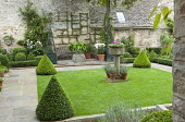 Small formal courtyard garden, clipped box cones, bench, metal obelisks, Ribes speciosum trained on wall