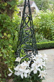 Lilium 'Navona' in container by obelisk
