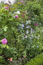 Roses, aster, geranium, phlox, box edging