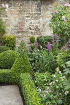 Box border edging and clipped shapes, Penstemon 'Sour Grapes', roses, geranium