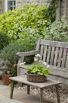 Wooden bench and table, pelargonium in basket, Nicotiana sylvestris, cornus