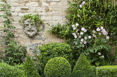 Head mask and Itea ilicifolia on stone wall, Japanese anemone, metal obelisk, clipped box shapes