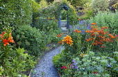 Alstroemeria aurantiaca 'Orange King', Lilium 'Brunello', aconitum, allium seedheads, erngium, rose on arch, slate chippings path