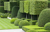 Pleached hornbeam standard cubes, clipped box and yew shapes