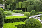 Formal town garden, clipped box and yew shapes, pleached hornbeam screen, Portuguese limestone patio and steps