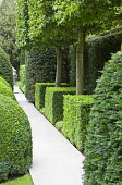 Portuguese limestone path, pleached hornbeams, box cubes, yew hedge