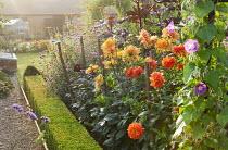 Box-edged border with Dahlia 'Geerlings' Indian Summer', Ricinus communis, Verbena bonariensis, Tithonia rotundifolia, Ipomoea purpurea 'Crimson Rambler'