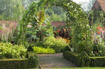Arch with Ipomoea purpurea 'Crimson Rambler', clipped box-edged borders, Nicotiana 'Lime Green'