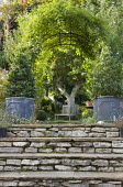 Stone steps leading to wooden bench around tree trunk, bay trees in zinc containers