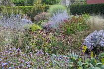 Aster 'Lutetia', Persicaria 'Red Baron', Phlomis russeliana seedheads, Perovskia atriplicifolia 'Little Spire' and 'Blue Spire', Ceratostigma willmottianum, Echinacea purpurea 'Pica Bella'