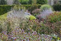 Perennial border, Persicaria 'Red Baron', Phlomis russeliana seedheads, Perovskia atriplicifolia 'Little Spire' and 'Blue Spire', Ceratostigma willmottianum, Echinacea purpurea 'Pica Bella', Deschamps...