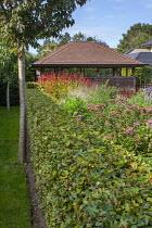 Clipped beech hedge, Eupatorium maculatum 'Laag', Persicaria amplexicaulis 'Firedance', garden room