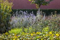 Echinops ritro 'Veitch's Blue', Perovskia atriplicifolia 'Little Spire', Veronicastrum 'Fascination', Prunus subhirtella 'Dahlem'