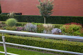 View from balcony to contemporary perennial border surrounded by beech hedges, perovskia, persicaria, aster, grasses