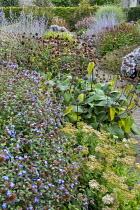 Persicaria 'Red Baron', Phlomis russeliana seedheads, Perovskia atriplicifolia 'Little Spire' and 'Blue Spire', Ceratostigma willmottianum, Hylotelephium spectabile 'Stardust' syn. sedum, Echinacea pu...