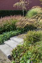 Stipa gigantea, Prunus sargentii, Persicaria amplexicaulis 'Fine Pink', Miscanthus sinensis 'Morning Light, Alchemilla mollis, Geranium 'Dilys', concrete steps