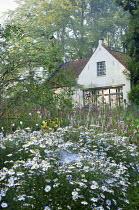 White cottage, Kalimeris incisa 'Madiva', Persicaria amplexicaulis