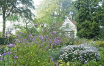 White cottage, Kalimeris incisa 'Madiva', Vernonia arkansana 'Mammuth' syn. Vernonia crinita
