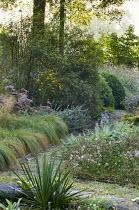 Path through shady borders, salvia, aster, Rudbeckia triloba, Saponaria x lempergii 'Max Frei'