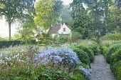 View along path leading to cottage, Aster 'Photograph', Persicaria amplexicaulis, anemones, clipped box hedges