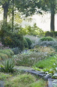 Perennial borders in woodland glade