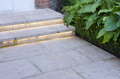 Stone steps with lighting, low hedge of Euonymus japonicus 'Microphyllus', cream granite paving, box substitute or alternative