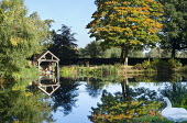 View across lake to wooden boathouse, swan
