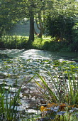 Natural pond with water lilies
