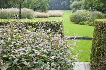 Persicaria campanulata, hornbeam hedge
